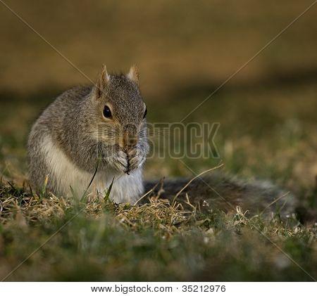 Reverent Squirrel