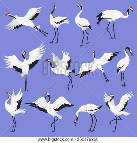 Crane Birds With Red Crowns Vector Illustration. Japanese Cranes In Different Poses. Flying And Stan