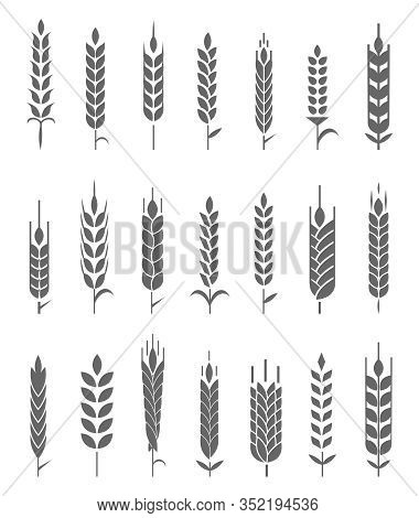 Wheat Ears Icons And Logo Set. Organic Wheat, Bread Agriculture And Natural Eat.