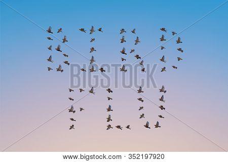 Sparrow Flock Flying In Sky, Bird Flu Or Avian Influenza Concept. Group Of Small Birds.