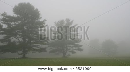 Trees At The Edge Of A Field, On A Foggy Maine Morning