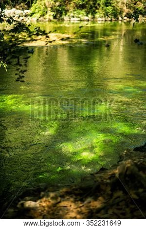 Vertical Picture Of Famous River Sorgue With Beautiful Green Water Plants And Trees Around In Hot Su