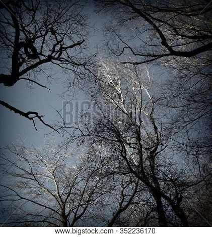 A View From A Tree Tops Of Several Beech And Oak Trees In The Sababurg Primeval Forest, Lomography,