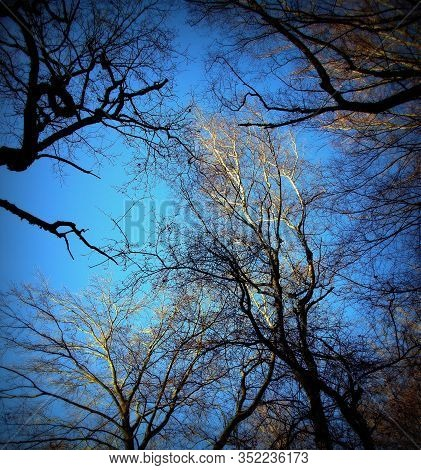 A View From A Tree Tops Of Several Beech And Oak Trees In The Sababurg Primeval Forest, Lomography