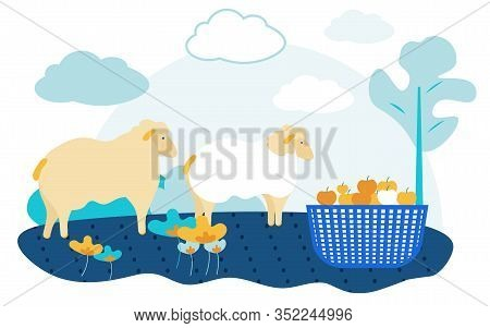 Sheep On Farm Near Basket With Apples. Vector Illustration. People On Farm. Natural Products. New Te