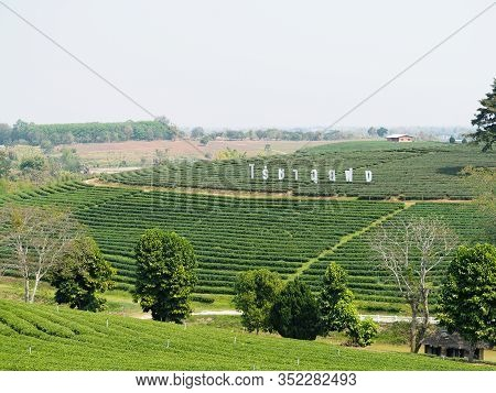 Chiang Rai, Thailand - February 10, 2020 ; Landscape Of Choui Fong Tea Plantation At Mae Chan, Chian