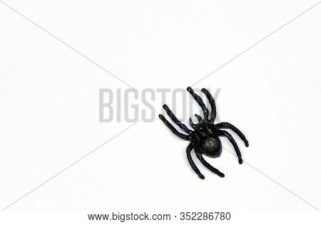 Black Big Spider Isolated On A White Background Top View With A Copy Space. Not A Real Spider, A Tar