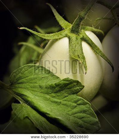 Green Tomato And Leaf