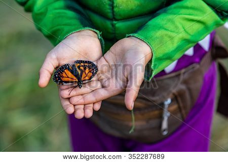 A Close Up High Angle Shot Of A Calm Monarch Butterfly Resting On The Palm Of The Hands Of A Caucasi