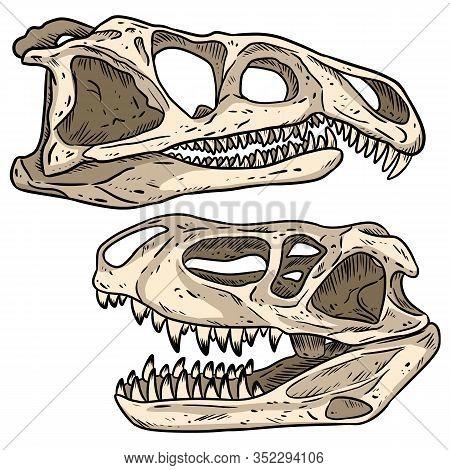 Carnivore Dinosars Skulls Line Hand Drawn Sketch Image Set. Archosaurus Rossicus And Prestosuchus Ch