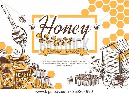 Sketch Honey Background. Hand Drawn Tasty Sweet Dessert Natural Organic Honeycomb, Beeswax And Bee,
