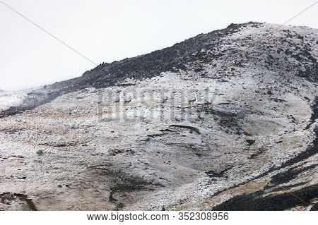 Ibex On The Mountainside In Fog And Snowfall. Central Asian Mountain Goats During Daily Food Migrati