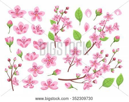 Sakura Blossom. Asia Cherry, Peach Flowers. Isolated Almond Garden Or Park Plants. Pink Budding Flor
