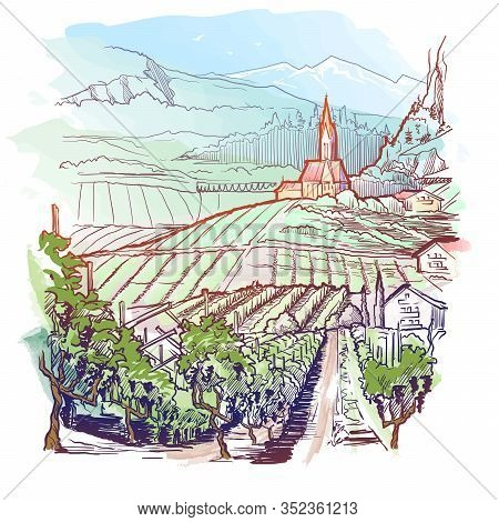 Vinyard In Tirol Alps, Austria. Rural Panorama Of The Mountain Valley With A Grapevine Plantation An