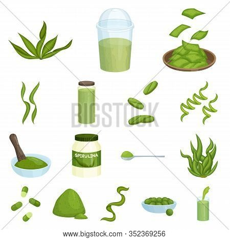 Vector Illustration Of Spirulina And Seaweed Sign. Collection Of Spirulina And Vegan Stock Vector Il