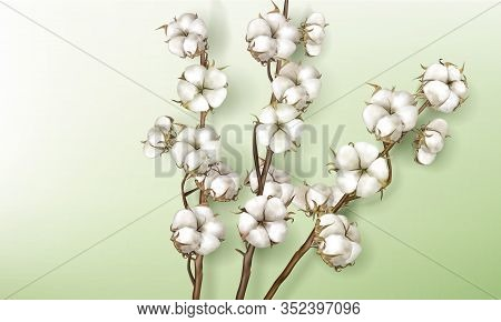 Realistic Cotton Branches With Flowers, Beautiful Stems With White Blossoms Isolated On Green Backgr