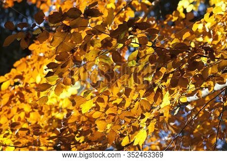 Panorama Of Colorful Leaves In The Autumn