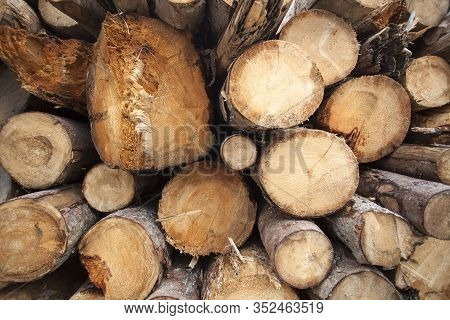 Closeup Of Round And Stacked Firewood Pieces