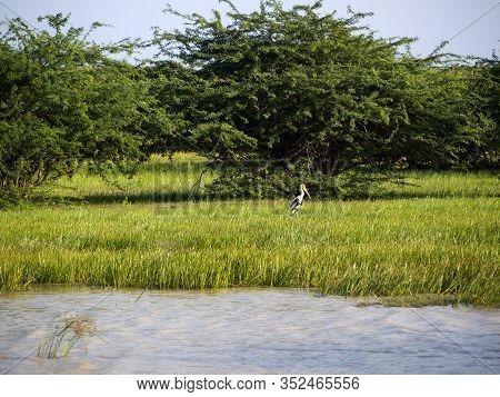 Beautiful Landscape At The Bundala National Park In Sri Lanka
