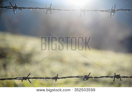 Security Sharp Metal Wire Barbed Fence Protection Border. Rusty Sharp Metal Danger Focus On Steel Fe