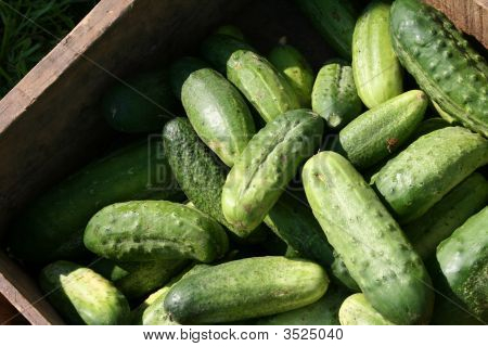 Fresh Geen Pickles