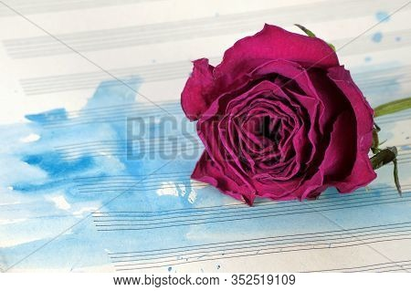 Beautiful Purple Rose On A Music Sheet. Music Sheet In Blue Watercolor Paint. Music Concept. Dry Ros