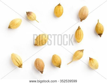 Spice Coriander (coriandrum Sativum) Seeds Isolated On White Background. Diet And Weight Loss Concep