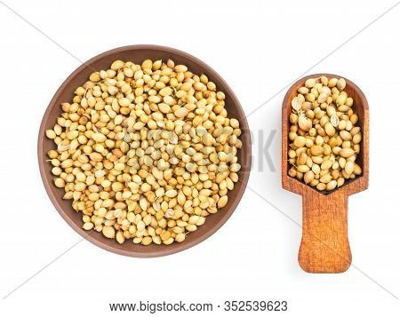 Spice Coriander (coriandrum Sativum) In Clay Plate And Scoop, Isolated On White. Diet And Weight Los