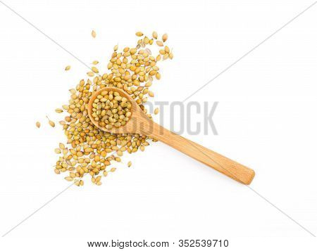 Spice Coriander (coriandrum Sativum) In Wooden Spoon On White Isolated Background. Indian Cuisine, A