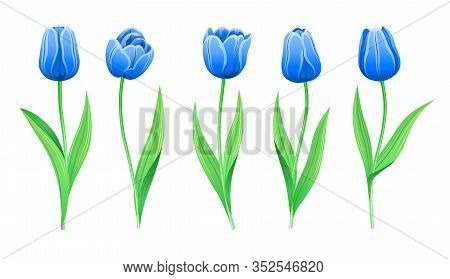Collection Of Vector Rare Blue Tulips With Stem And Green Leaves. Set Of Different Spring Flowers. I