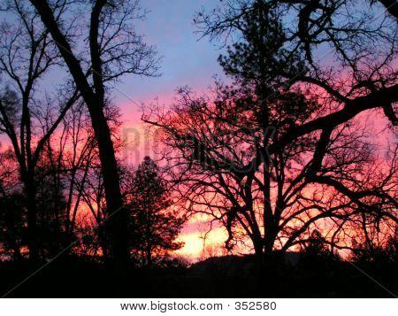 Trees Sunrise