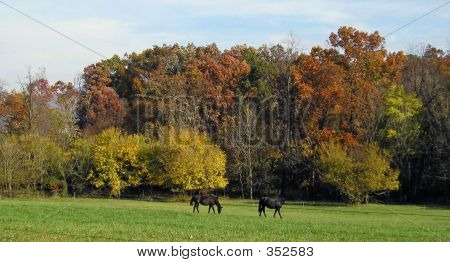 two black horses on a fall day poster