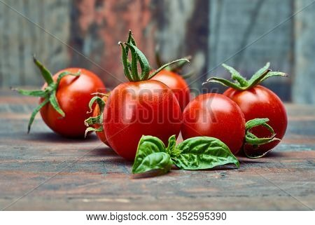 Fresh tomatoes with leaf basil at old wooden board in rustic style. Vegetable still life harvest.