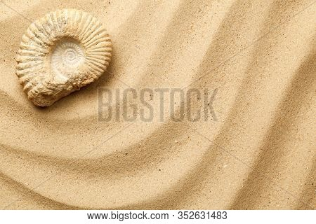 Ammonite On Sea Sand Background. Flat Lay, Top View