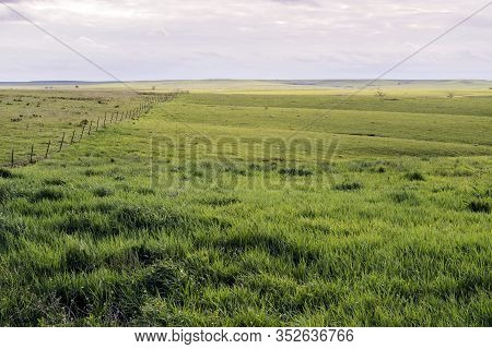 Green Pasture Land In The Flint Hills Of Kansas