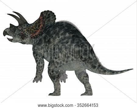 Triceratops Dinosaur Tail 3d Illustration - Triceratops Was A Herbivorous Ceratopsian Dinosaur That