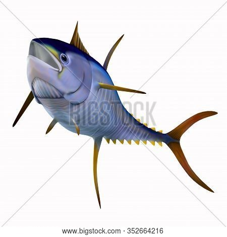 Yellowfin Tuna On White 3d Illustration - The Yellowfin Tuna Is A Fast Swimming Predator That Is Fou
