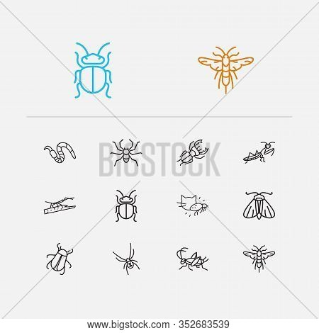 Bug Icons Set. Cricket And Bug Icons With Black Widow Spider, Stag Beetle And Stickbug. Set Of Arach