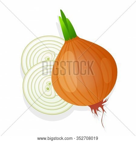 Unpeeled Onion Bulb With Green Sprout And Slice Isolated On White Background. Ripe Onion. Vector Ill