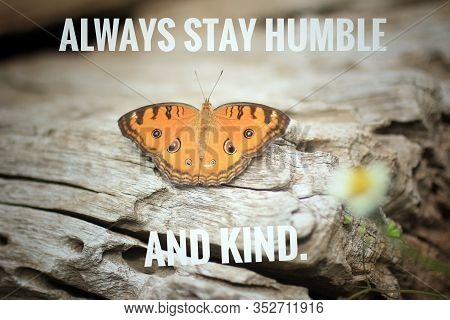 Inspirational Quote - Always Stay Humble And Kind. With Beautiful Orange Butterfly On White Rustic W