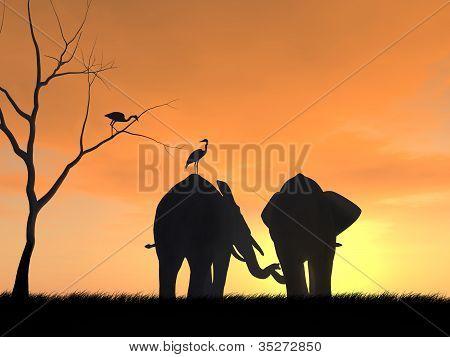 Elephants in Friendship