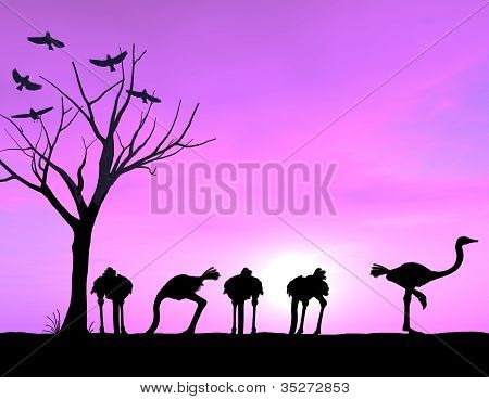 Ostrich Showing Courage