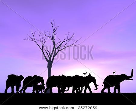 Elephants Traveling at Sunset