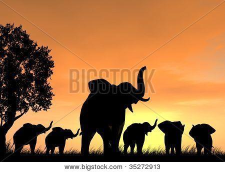 Elephant Teaching Five Baby Elephants