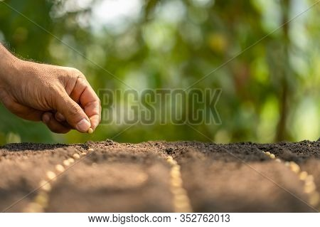 Hand Of Farmer Planting A Brown Seeds In Soil. Growth And Environment Concept