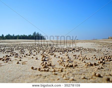 traces of crabs