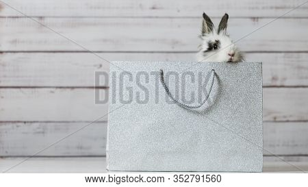 Close-up Of Cute White Bunny Is Sitting In Silver Paper Bag. Concept Of Gift And Present