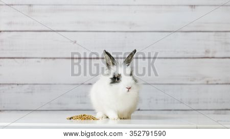 Close-up Of Cute White Bunny Is Eating Dry Rodent Food Mix On Wooden Background. Balanced Feed With