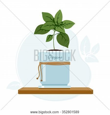 Oregano Or Sweet Marjoram Flowering Plant In Mason Jar On Kitchen Window Sill. Culinary And Dietary