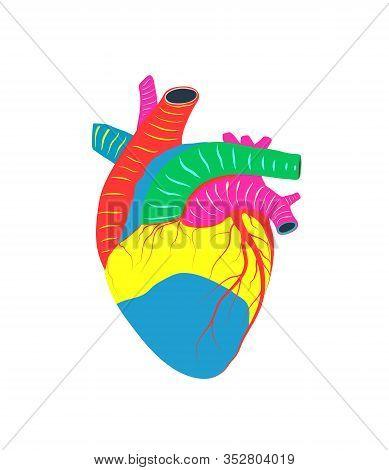 Human Heart Artistic Cardiac Love And Life Colorful Realistic Shape Design.